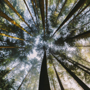how to photograph forest and trees